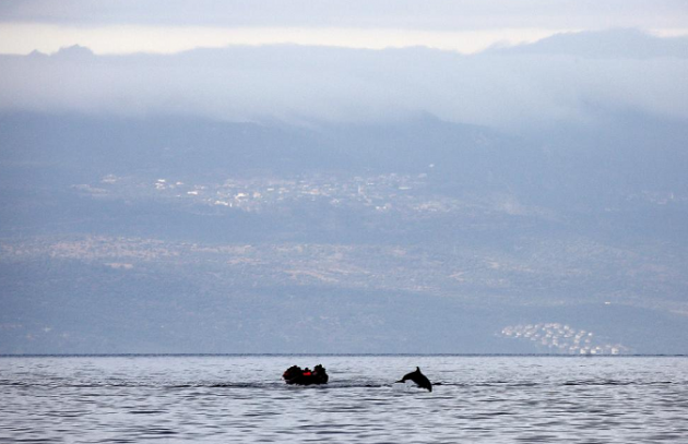 behrakis photo delfini