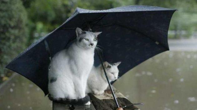 Αποτέλεσμα εικόνας για βροχερός καιρός