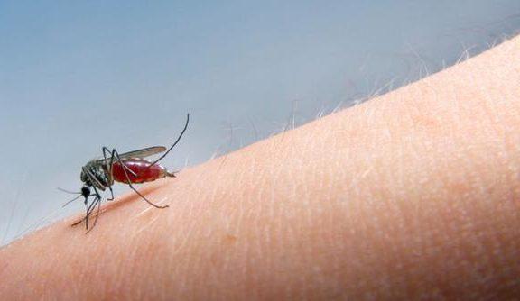 κεελπνο-57-κρούσματα-ελονοσίας-μέχρι-σή