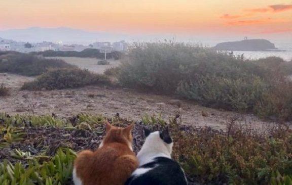 δύο-γάτες-χαζεύουν-το-ηλιοβασίλεμα-στ