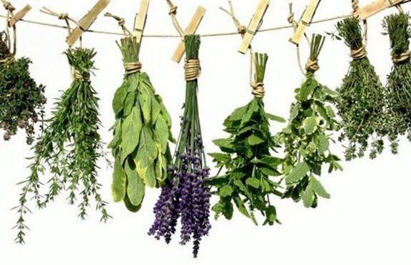 ποιο-βότανο-θα-σου-χαρίσει-πλούσια-μαλ