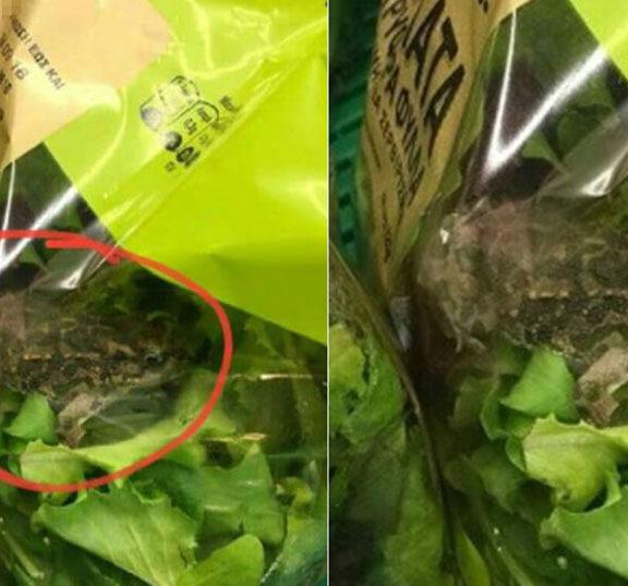 βάτραχος-μέσα-σε-σαλάτα-μεγάλης-ελλην
