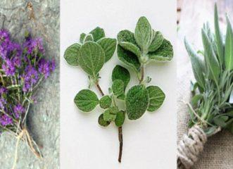 το-κρητικό-ίαμα-από-βότανα-της-κρητική