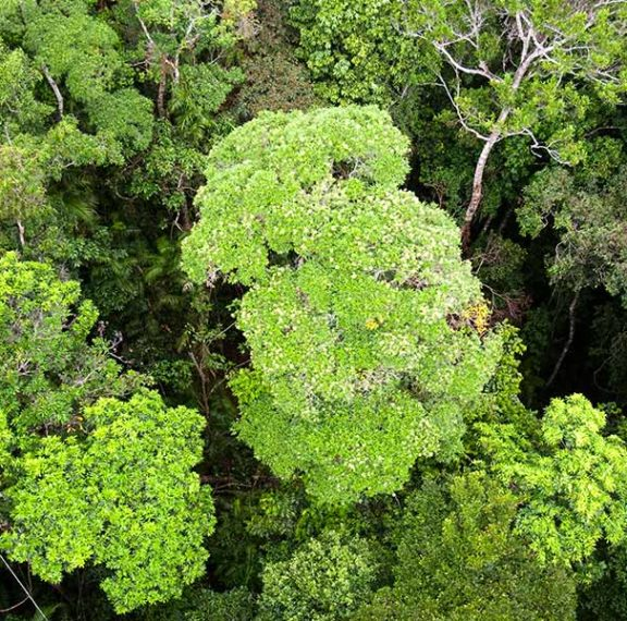 η-αυστραλία-θα-φυτέψει-ένα-δισ-δέντρα-ε