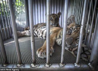 χιλιάδες-ζώα-σε-όλο-τον-κόσμο-κακοποιο