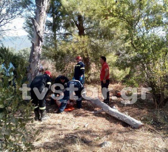 δέντρο-καταπλάκωσε-γυναίκα-τραυματ