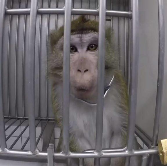 βίντεο-που-σοκάρει-με-βασανιστήρια-σε