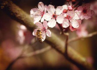 το-γάλα-αμυγδάλου-σκοτώνει-τις-μέλι