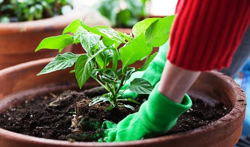 θες-να-φτιάξεις-τον-δικό-σου-κήπο-στη