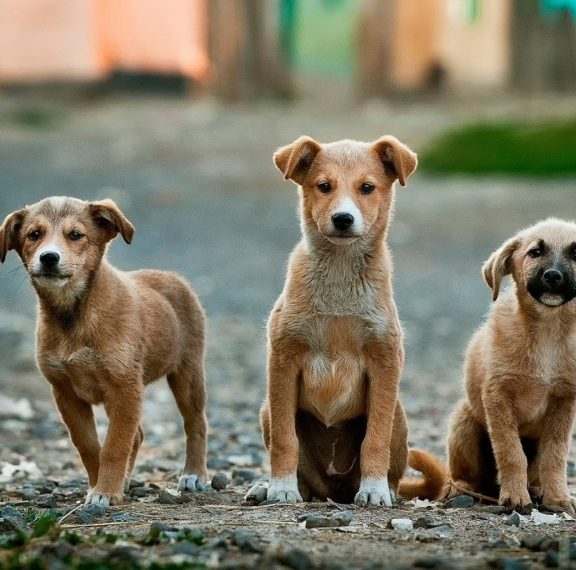 πώς-θα-τσιπάρετε-δωρεάν-τον-σκύλο-και-τ