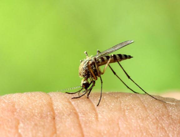 πόσο-επικίνδυνα-είναι-τα-κουνούπια-στ