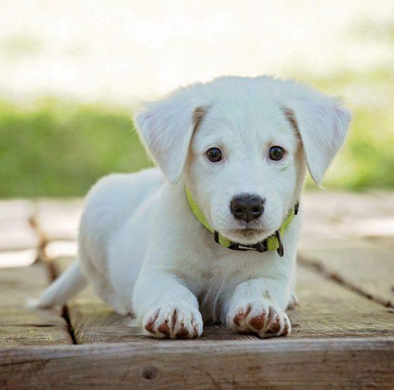 μύθος-ότι-ένα-σκυλίσιο-έτος-ισοδυναμε