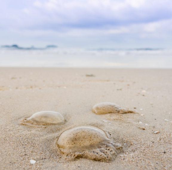 προσοχή-σε-αυτές-τις-παραλίες-έχουν-εμ