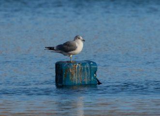 ένα-αλιευτικό-θα-καθαρίσει-1-500-κιλά-πλα