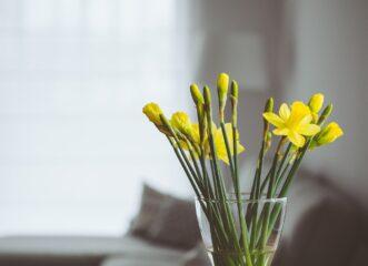 feng-shui-και-λουλούδια-πώς-τονώνουν-την-ενέρ