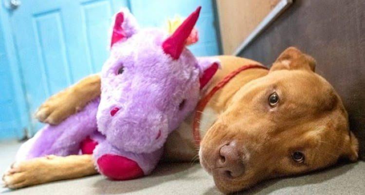 Ράγισε καρδιές ο σκύλος που «έκλεψε» 5 φορές έναν μωβ λούτρινο μονόκερο