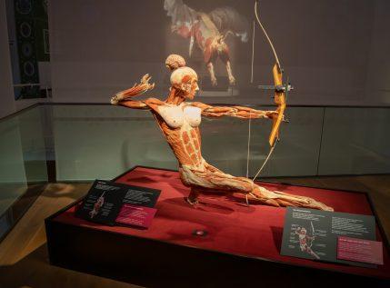Body Worlds: Έρχεται για πρώτη φορά στην Ελλάδα μία παράξενη αλλά συναρπαστική έκθεση
